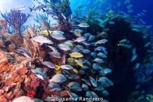 u/w shallow life, caribbean reef, Playa del Carmen by Susanna Randazzo