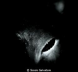 Black fish by Scozio Salvatore