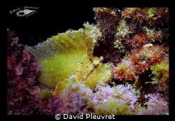 Leaf fish by David Pleuvret