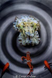 """""""Master Hypnotist"""" part of my Underwater Surrealism body ... by Conor Culver"""