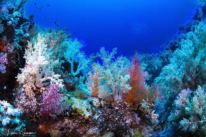 Coral Forest/Photographed with a Tokina 10-17 mm fisheye ... by Laurie Slawson
