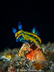 'Blue Steel'