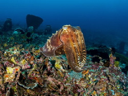 Doyen
