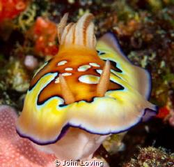 Last dive in Palau by John Loving