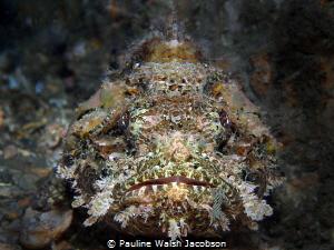 Spotted Scorpionfish, Scorpaena plumieri, Blue Heron Brid... by Pauline Walsh Jacobson