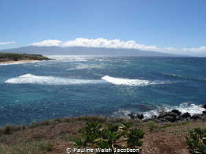 Surfers and Windsurfers, Hookipa, Maui, Hawaii by Pauline Walsh Jacobson