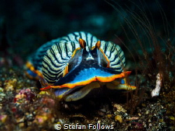 Clothes of sand