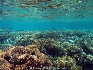 Shallow Coral Reef, Wakatobi Marine Preserve, Indonesia by Pauline Walsh Jacobson
