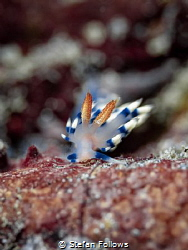 Gently Tender