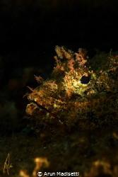 Spotted scorpion fish, single light (no snoot) by Arun Madisetti
