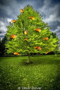 """""""Maldivian Orange Tree"""" part of my Underwater Surrealism ... by Conor Culver"""