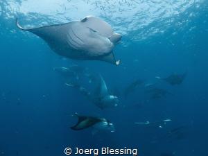 Post dive manta session outside of Hanifaru Bay. by Joerg Blessing