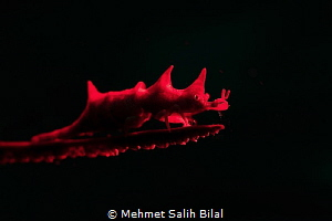 Red dragon. by Mehmet Salih Bilal