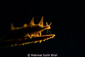 Yellow dragon. by Mehmet Salih Bilal