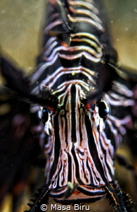 long face of a lion fish by Masa Biru