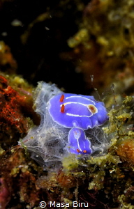 2 nudi making a bed by Masa Biru