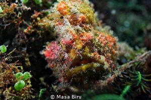 stone fish by Masa Biru