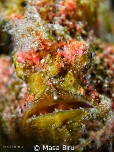 face of a stone fish by Masa Biru