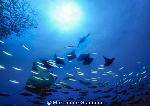 Dharavandhoo. Manta vision Atollo di Baa Nikon D800e , ... by Marchione Giacomo