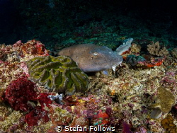 Sneak Peek