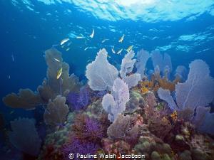 Dry Rocks Reef, John Pennekamp Coral Reef State Park, Key... by Pauline Walsh Jacobson