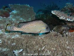 Unidentified Fish by Hansruedi Wuersten