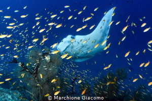 Behind a fish curtain
