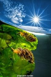 Reflection solar by Salvatore Ianniello