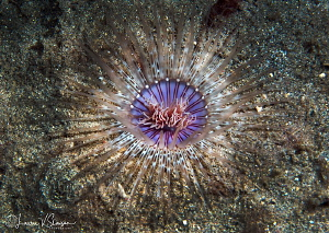 Bird's Eyeview of an Anemone/Photographed with a Canon 60... by Laurie Slawson
