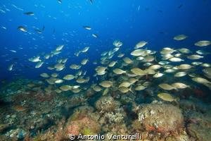 diving in Scilla, Italy by Antonio Venturelli