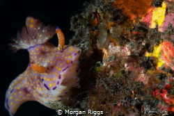BUCKET LIST Caught this nudi climbing a long lost bucket... by Morgan Riggs