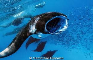 Hanifaru bay and the mantas ray by Marchione Giacomo