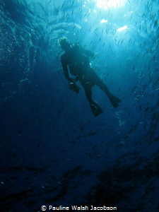 Diver and Baitfish, Carval Rock, U.S. Virgin Islands by Pauline Walsh Jacobson