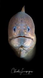 Muraenidae ! by Claude Lespagne