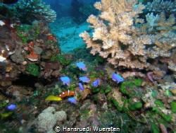 Marine Life Dauin by Hansruedi Wuersten