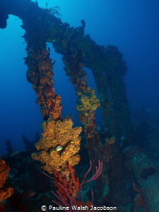 Wreck of the RMS Rhone, Salt Island, British Virgin Islands by Pauline Walsh Jacobson