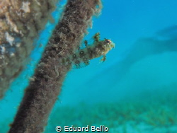 Young coralfish nearby a anchor rope... by Eduard Bello