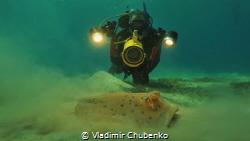 underwater videographer by Vladimir Chubenko