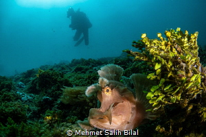 Searching for the rhinopias. by Mehmet Salih Bilal
