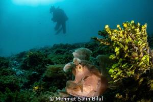 Searching for the rhinopias. by Mehmet Salih Bilal