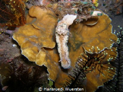 Nudibranch by Hansruedi Wuersten