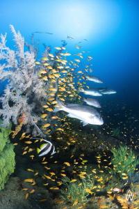 Sitting hidden at 42m, Atlantis reef must be one of the m... by Allen Walker