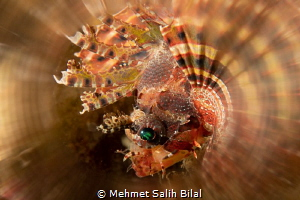 Lion fish with a creative filter. by Mehmet Salih Bilal