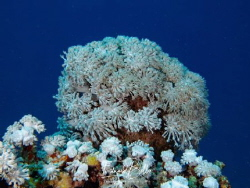 Awesome coral somewhere behind the bleu by Eduard Bello
