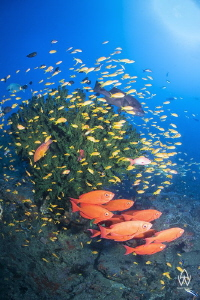 Image from Atlantis reef, just a little further down from... by Allen Walker