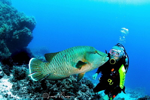 Pucker Up, Big Boy/Dive buddy and Napoleon Wrasse photogr... by Laurie Slawson