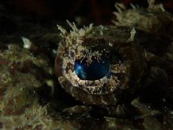 Croc eye by Maxine Hillier