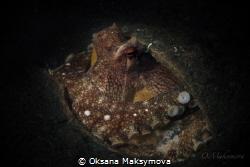 Coconut octopus  by Oksana Maksymova