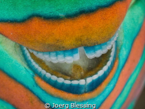 Smile-another dental closeup on a parrotfish.. by Joerg Blessing