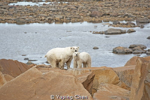Bear Mom and Her Cub by Yuping Chen